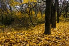 Herbstwald im Laub Lizenzfreie Stockfotografie
