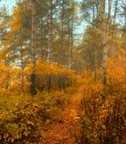 Herbstwald im Nebel - nebelhafte Landschaft des Herbstes Wald Lizenzfreies Stockbild