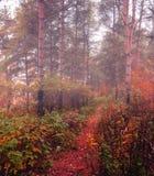 Herbstwald im Nebel - nebelhafte Landschaft des Herbstes Wald Lizenzfreies Stockfoto