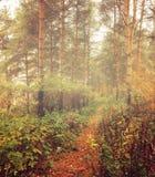 Herbstwald im Nebel - nebelhafte Landschaft des Herbstes Wald Stockfotos