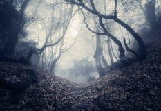 Herbstwald im Nebel Schöne natürliche Landschaft Abbildung der roten Lilie Lizenzfreie Stockbilder