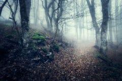Herbstwald im Nebel Schöne natürliche Landschaft Abbildung der roten Lilie Lizenzfreie Stockfotos