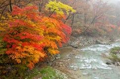 Herbstwald im nebelhaften Morgen Lizenzfreie Stockfotos