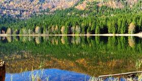 Herbstwald im See Stockbild