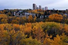 Herbstwald im Tausendstelnebenflußtal Stockbild