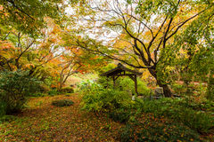 Herbstwald in Japan stockfotos