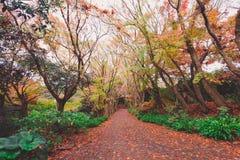 Herbstwald in Japan lizenzfreies stockfoto