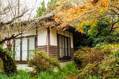 Herbstwald in Japan mit Häusern lizenzfreie stockfotos