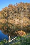 Herbstwald, Landschaft Lizenzfreies Stockbild