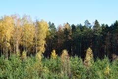 Herbstwald in Lettland lizenzfreie stockfotografie