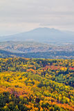Herbstwald mit Berg Stockfotografie
