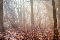 Herbstwald mit bloßen Bäumen und Morgen fog_ lizenzfreie stockbilder
