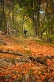 Herbstwald mit bunten Blättern und Zahl der abgehenden Person Stockfoto