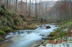 Herbstwald mit einem Gebirgsfluss lizenzfreie stockbilder