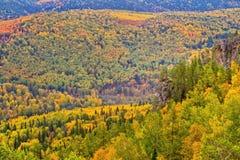 Herbstwald mit Fluss Stockfoto