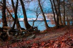 Herbstwald mit gefallenen Blättern lizenzfreies stockbild