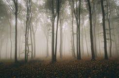 Herbstwald mit mysteriösem Nebel Stockbild