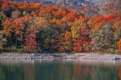 Herbstwald mit Reflexion auf Biogradsko See Stockfotos