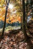 Herbstwald mit Sonnenlicht Lizenzfreie Stockfotografie