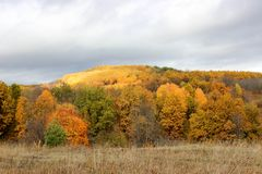 Herbstwald am Nachmittag stockfotografie