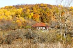 Herbstwald am Nachmittag lizenzfreie stockfotografie