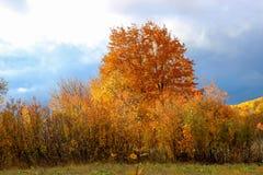 Herbstwald am Nachmittag stockfoto