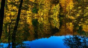 Herbstwald am Rand eines Sees Lizenzfreie Stockbilder