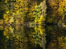 Herbstwald am Rand eines Sees lizenzfreie stockfotos