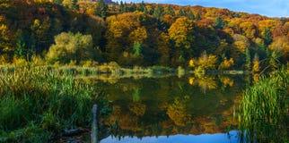 Herbstwald am Rand eines Sees Stockfotografie
