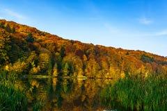 Herbstwald am Rand eines Sees Stockfoto