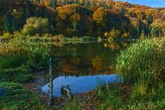 Herbstwald am Rand eines Sees stockfotos