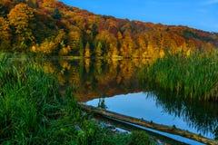 Herbstwald am Rand eines Sees Stockbilder