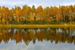 Herbstwald reflektiert im Wasser Stockfotos