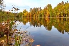 Herbstwald reflektiert im Wasser Lizenzfreie Stockfotos