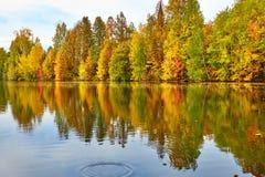 Herbstwald reflektiert im Wasser Stockfotografie