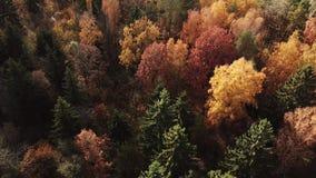 Herbstwald am sonnigen Tag stock video