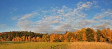 Herbstwald und -himmel Lizenzfreies Stockbild
