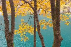 Herbstwald und Türkissee Lizenzfreie Stockfotos