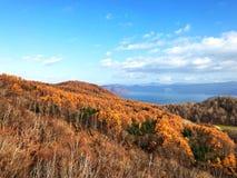 Herbstwald von der Drahtseilbahnansicht Stockfotos
