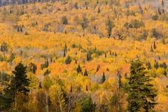 Herbstwald von einer Vogelschau Lizenzfreie Stockfotos