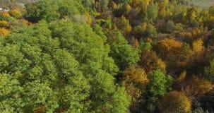 Herbstwald von gelben Bäumen am sonnigen Tag stock video footage