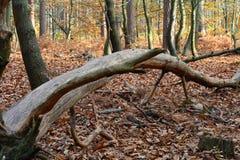 Herbstwald wild Lizenzfreie Stockfotos