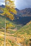 Herbstwald an Ziarska-dolina - Tal in hohem Tatras, Slovaki Stockfotos