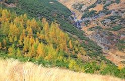 Herbstwald an Ziarska-dolina - Tal in hohem Tatras, Slovaki Stockbilder