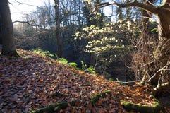 Herbstwaldland Lizenzfreies Stockfoto