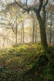 Herbstwaldland mit leichter Sonne strahlt Castinglicht aus lizenzfreies stockfoto