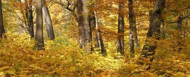 Herbstwaldlandschaft Lizenzfreie Stockfotografie