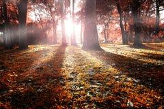 Herbstwaldlandschaft. Stockfotografie