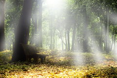 Herbstwaldlandschaft. Stockbild