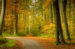 Herbstwaldlandschaft mit den Strahlen des warmen Lichtes das Goldlaub erhellend und des Fußwegs, die in die Szene führt stockbilder